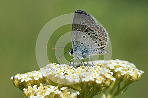 Insects In The Nature Stock Photo - Image: 25405880