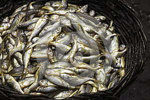 A Basket Of Fishes Royalty Free Stock Photos - Image: 25410578