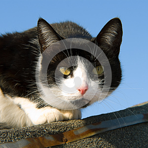 Cat On The Roof Stock Image - Image: 25412261