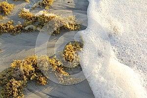 Shoreline Royalty Free Stock Image - Image: 25418536