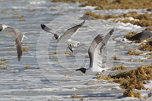 Seaweed And Seagulls At The Beach Royalty Free Stock Images - Image: 25418859