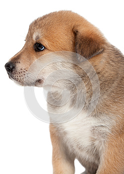 Puppy Stock Images - Image: 25421334