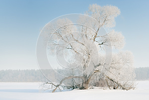 The Tree In Frost, The Snow-covered Plain. Stock Photography - Image: 25422892