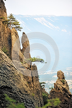 Pine Trees On The Steep Cliffs Royalty Free Stock Images - Image: 25423779