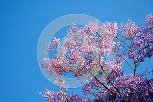 Violet Tree Stock Image - Image: 25445141