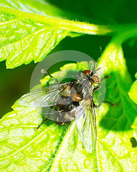 Fly Royalty Free Stock Images - Image: 25450549