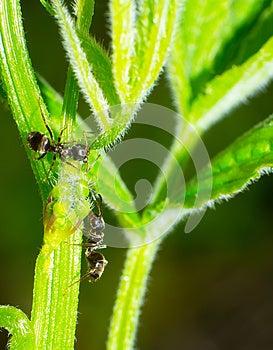 Ant Stock Photos - Image: 25450743