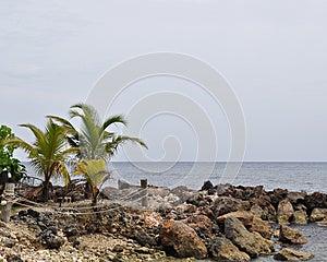 掌上型计算机岩石海岸线 免版税图库摄影 - 图片: 25470377