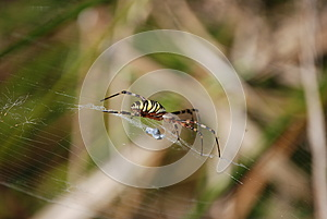 Spider Royalty Free Stock Photo - Image: 25490475