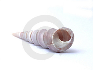 Shell. Royalty Free Stock Images - Image: 2550159