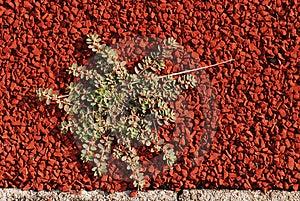 Το πράσινο φυτό αναπτύσσει στη διαδρομή Στοκ Εικόνα - εικόνα: 2559061