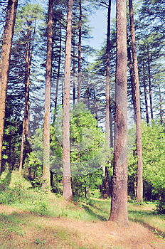 A Day In Eco-park_5 Stock Photography - Image: 25524712