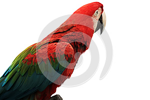 Parrot Stock Images - Image: 25529014