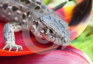 Portrait Of Lizards Royalty Free Stock Photography - Image: 25533807