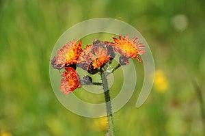Ανθίζοντας φυτό Στοκ Εικόνες - εικόνα: 25541924