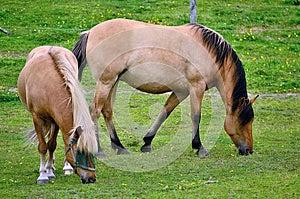 Two Horses Royalty Free Stock Photo - Image: 25546735
