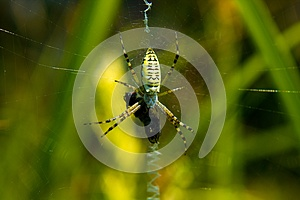 Spider (Mass Break) Royalty Free Stock Photo - Image: 25554035