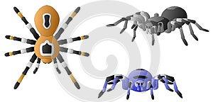 Spiders Stock Photo - Image: 25561570