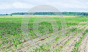 Farm Field Royalty Free Stock Images - Image: 25589499
