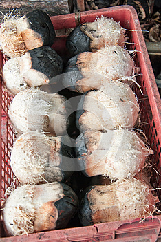 Burnt Coconuts Royalty Free Stock Photo - Image: 25590545