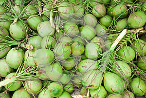 Coconuts Royalty Free Stock Photo - Image: 25590835