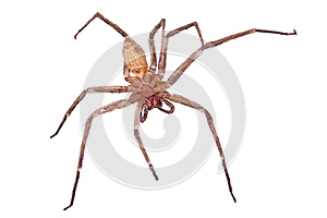 Spider Royalty Free Stock Photo - Image: 25599155