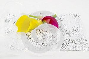 Calla Lilies And Ribbons Royalty Free Stock Photo - Image: 2562205