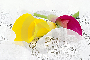 Calla Lilies And Ribbons Royalty Free Stock Images - Image: 2562219