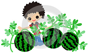 Cultivating Watermelons Royalty Free Stock Photography - Image: 25623977