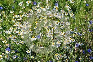 Meadow Flowers Royalty Free Stock Photo - Image: 25631665