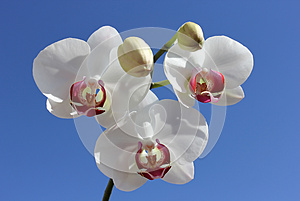 Beautiful White Orchid Stock Photography - Image: 25638172