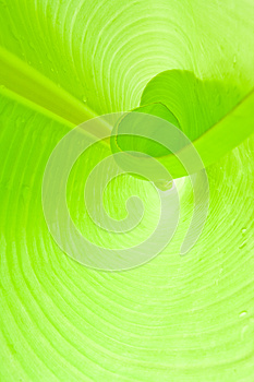 Interior Leaf Royalty Free Stock Photos - Image: 25643778
