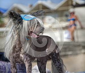 The Dog On The Beach Royalty Free Stock Images - Image: 25644549