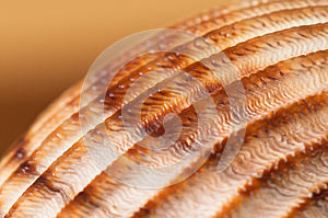 Seashell Stock Photos - Image: 25657383