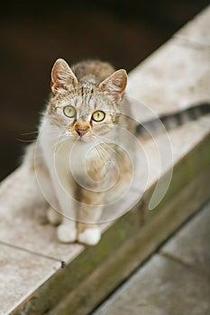 Cat Staring At You Royalty Free Stock Image - Image: 25665756