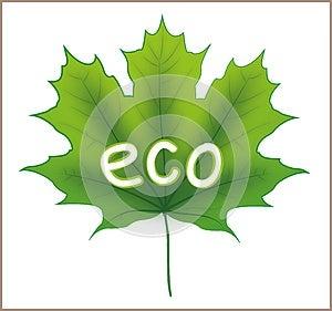Eco Maple Leaf Stock Photography - Image: 25694472