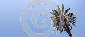 Palm Royalty Free Stock Image - Image: 25695436