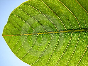 Leaf Detail Stock Photography - Image: 2574272