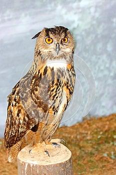 Eurasian Eagle Owl Bubo Bubo Royalty Free Stock Images - Image: 25701039