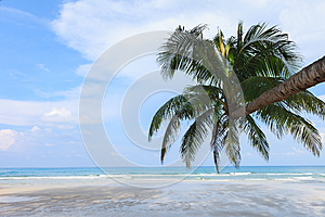 Coconut Tree On The Beach Stock Images - Image: 25750714
