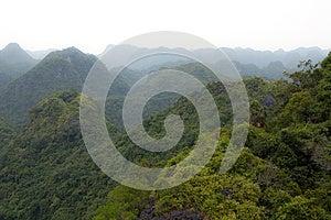 在视图的惊人的森林 免版税图库摄影 - 图片: 25755067
