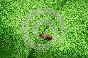 Two Ladybugs On Green Towel Royalty Free Stock Image - Image: 25777016