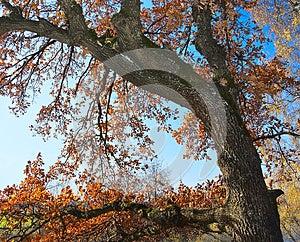 Autumn Royalty Free Stock Photo - Image: 25808535