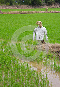 Scarecrow Made of Straw, Clothes Torn. Stock Photography - Image: 25830512