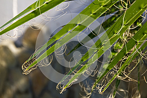 Palm Leaves Royalty Free Stock Images - Image: 25839179