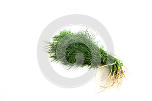 Dill On White Stock Images - Image: 25865954