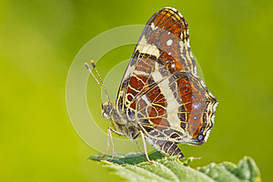 Colorful Butterfly Closeup Over Blurred Background Royalty Free Stock Photos - Image: 25867188