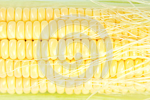 Fresh Corn Closeup Stock Photos - Image: 25868833
