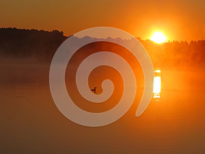 Common Loon With Sunrise Royalty Free Stock Photos - Image: 25882668