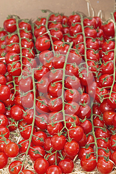 Multitude Of Cherry Tomatoes At The Market Royalty Free Stock Image - Image: 25887846